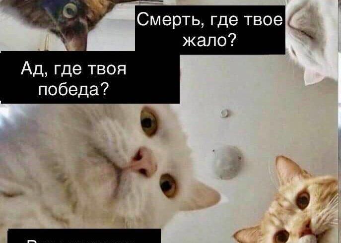 Православный богослов Наталля Василевич создала серию пасхальных ремейков мема про котиков, «уронивших всё»